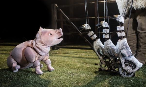 Photo of Babe, The Sheep-Pig – Exeter Northcott Theatre