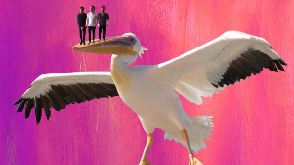 Photo of BRIGHTON BITES: Pelican – Pelican