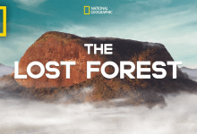 Photo of The Lost Forest – National Geographic, Nobel Peace Prize Shorts